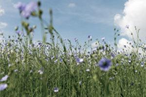Il Lino - dalla pianta ai tessuti pregiati