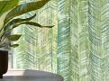 Zamiifolia Carbon 1