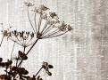 Imprint Wallpaper Driftwood 2