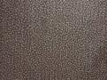 Atia Wallpaper Fossil