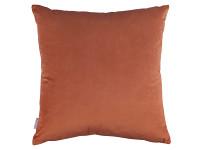 Maranta Cushion Hibiscus Image 3