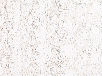 Oolite Wallcovering